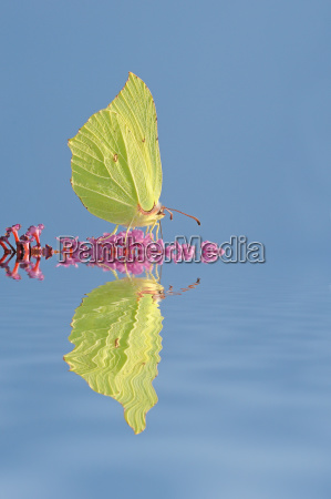 animal insect insects green fauna bloom