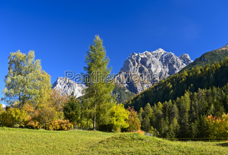 autumn on a mountain pasture in