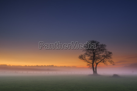 bare tree at sunset with fog