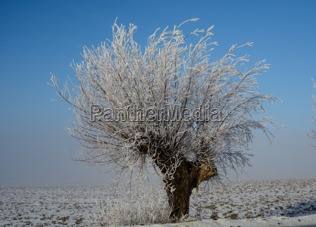 vinter jan 16