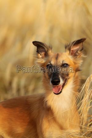 pet mammal fauna portrait watchful pets