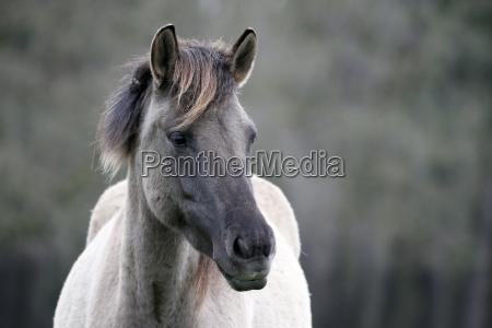 wild horse hampton foal hampton nordrhein