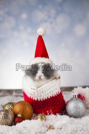 kleines haeschenlustiges kaninchen auf weihnachtshintergrund