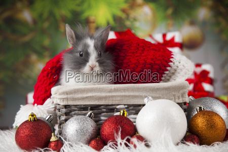 tierkaninchenhaeschen auf weihnachtshintergrund