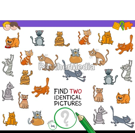 zwei identische katzenbilder fuer kinder