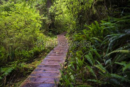 rainforest trail pacific rim nationalpark vancouver
