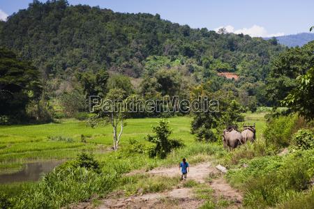 elephant trekking is a very popular