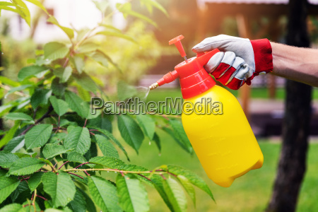 gaertner der kirschbaum gegen plagen und