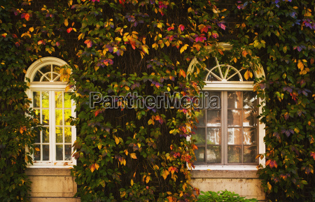 windows framed with vines and autumn
