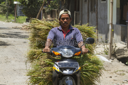 man on a motorcycle carrying grass