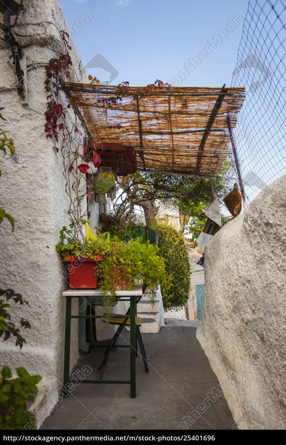 plants, growing, on, a, table, outside - 25401696