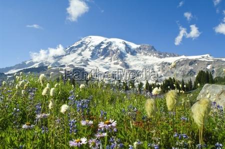 wildblumen im mount rainier nationalparkwashingtonusa