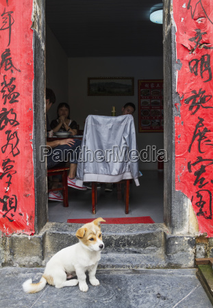 puppy by a house xidi anhui