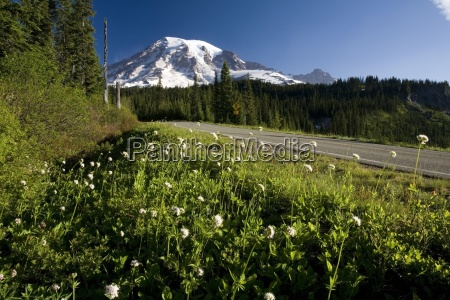 wildflowers along road mt rainier in