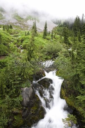 paradise creek tatoosh mountains mt rainier
