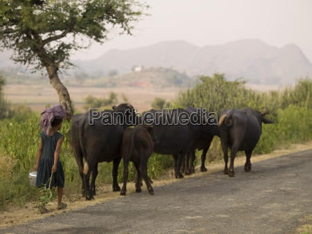 young girl walking behind herd of