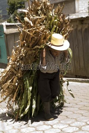 mittelamerika aelterer landwirt der seinen crop