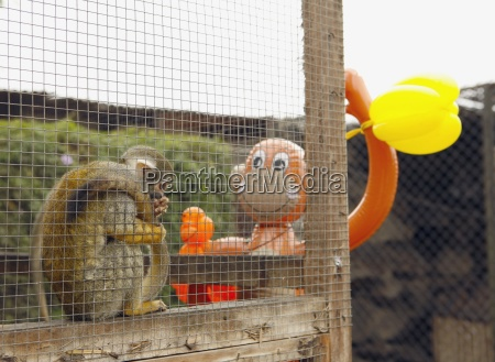 affe in cage looks at monkey