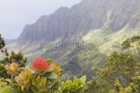 kalalau valley na pali coast state