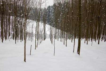 wald mit schnee im winter am