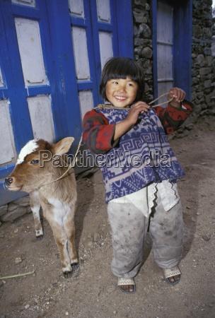 young girl with pet calf lukla