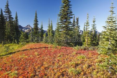 autumn colors and the tatoosh mountains