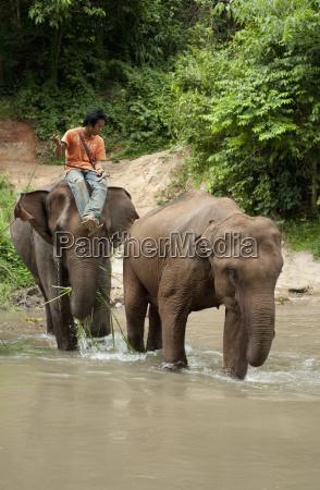 a man sitting on an elephant