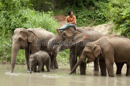 a, man, sitzt, auf, einem, elefanten - 25437228