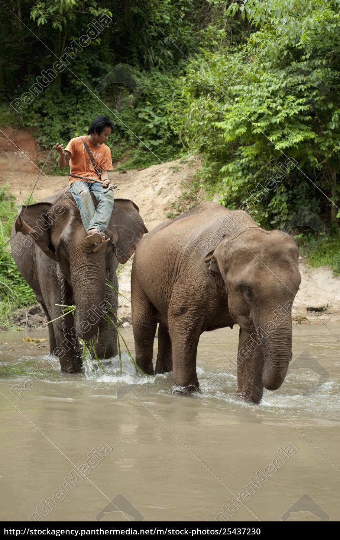 ein, mann, sitzt, auf, einem, elefanten, als - 25437230