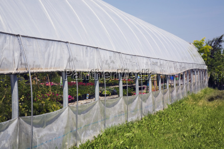 plant production inside a commercial greenhouse