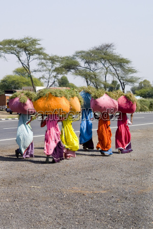 india rajasthan road to jodhpur women
