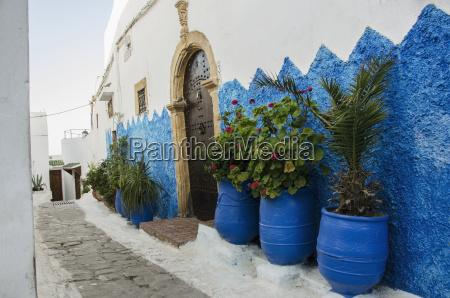 morocco rabat plants in row along