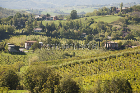 rolling, hills, of, vineyards, and, farm - 25454526