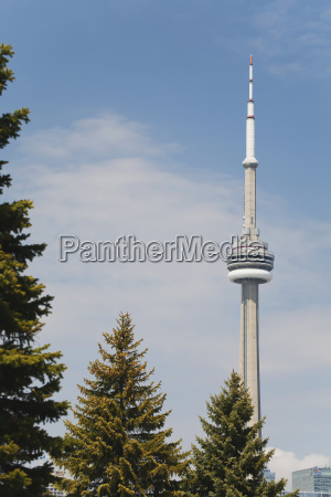 cn tower framed with evergreen trees