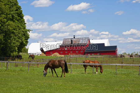 horse farm in the eastern townships