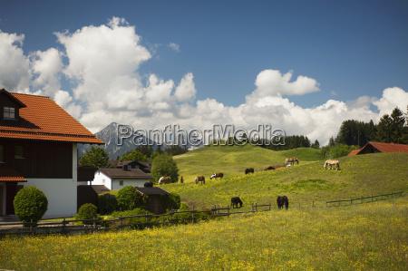 a springtime pastoral scene in southern