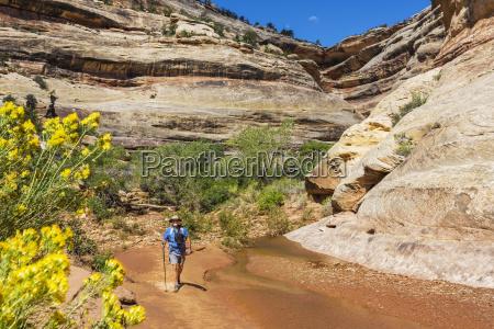 ein maennlicher wanderer wandert ein creek