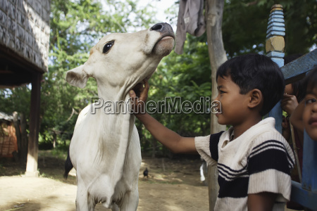 a boy caring for a cow