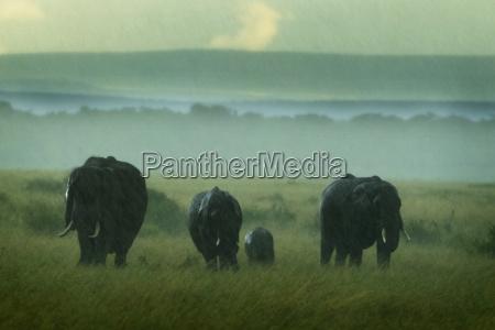 eine elefantenfamilie kaempft waehrend eines heftigen