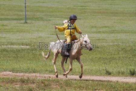 fauna asien mongolei pferd ross pferde