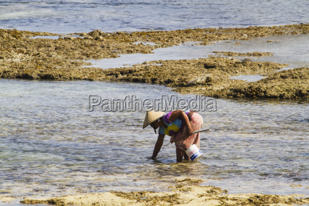 man picking molluscs on kuta beach