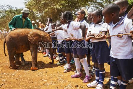 schoolchildren watching an orphaned african elephant