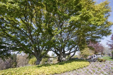 queen elizabeth park vancouver british columbia