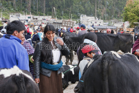 people selling and buying cattle at