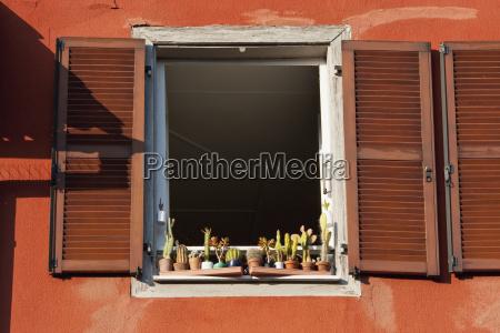kaktuspflanzen, auf, einer, fensterscheibe, straßburg, frankreich - 25487030