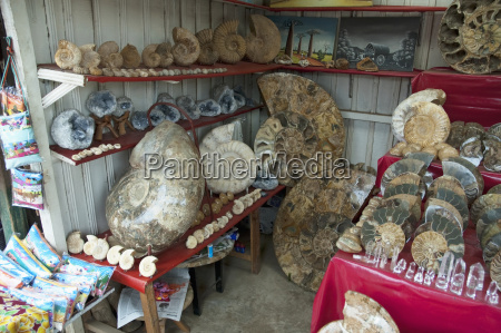 ammonites for sale at the souvenir