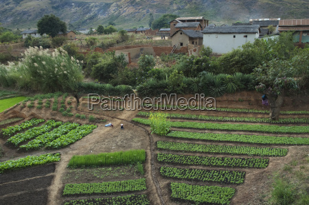 afrika felder madagaskar gemuesen gepflanzt angepflanzt