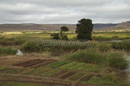 gemuese gepflanzt in feldern entlang der