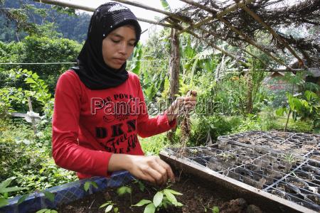 transplantation von seedlings at the greenhand
