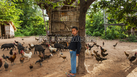lanten boy feeding animals luang namtha